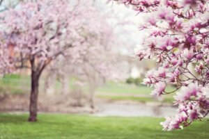 business bloom this spring