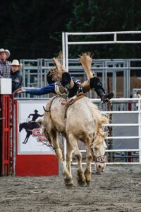 houston rodeo and livestock, livestock show, livestock competition, events at the rodeo