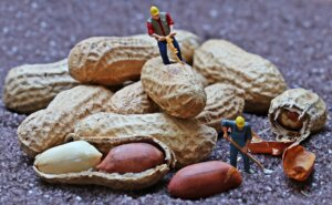 peanut and harvesters business plan
